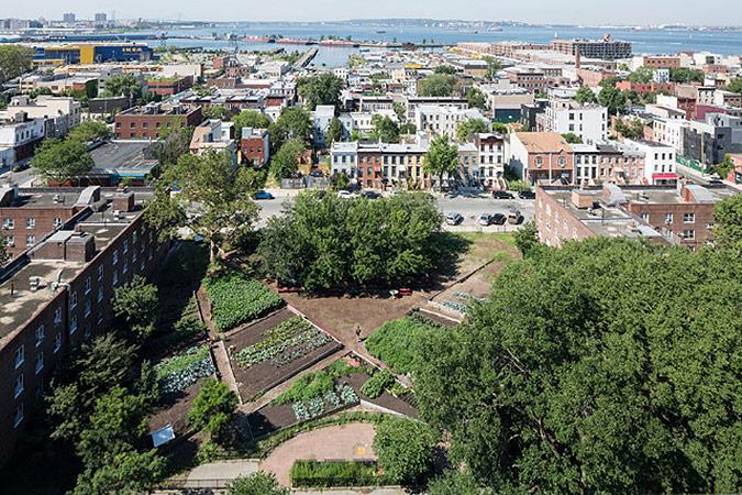 городской огород фото